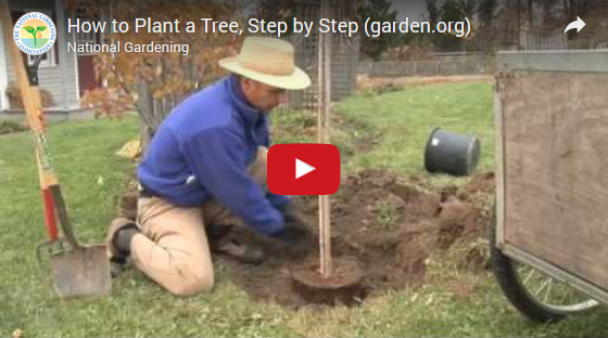 Learn to Plant a Tree