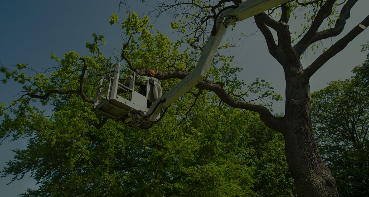 Tree Care Serice by Environmental Green Tree Care