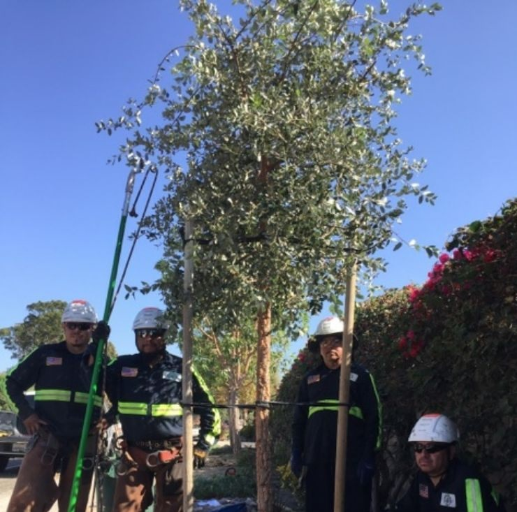 Tree Care by Environmental Green Tree Care