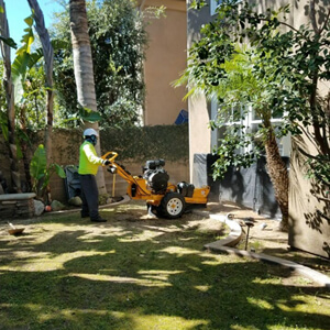 Landscaping by Environmental Green Tree Care