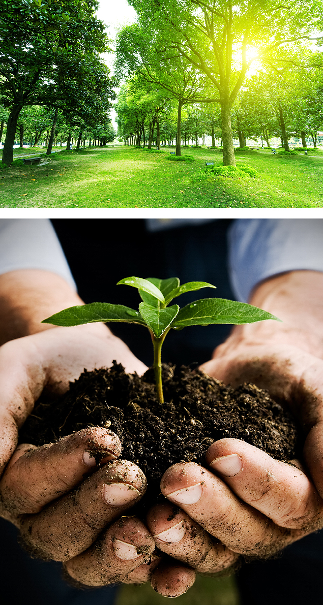 Plant a Tree by Environmental Green Tree Care